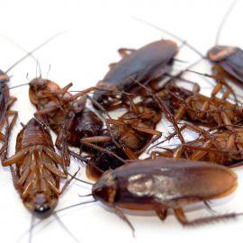 Борба срещу хлебарки